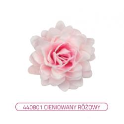 Aster peoniowy różowy...