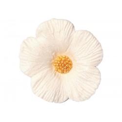 Kwiatek - Hibiskus średni...