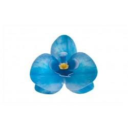 Storczyk niebieski waflowy...