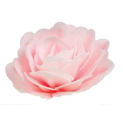 Róża Chińska różowa...