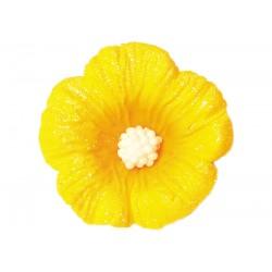 Kwiatek - Hibiskus mały...