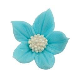 Kwiatki - Płomyk niebieski...