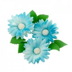 Rumianki niebieskie -...