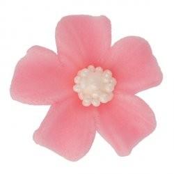 Kwiatki - Niezapominajka...