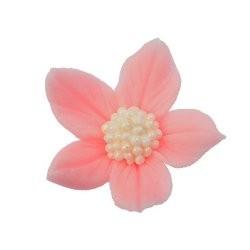 Kwiatki - Płomyk różowy -...